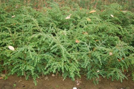 Seedlings Amp Transplants Bosch S Countryview Nursery Inc