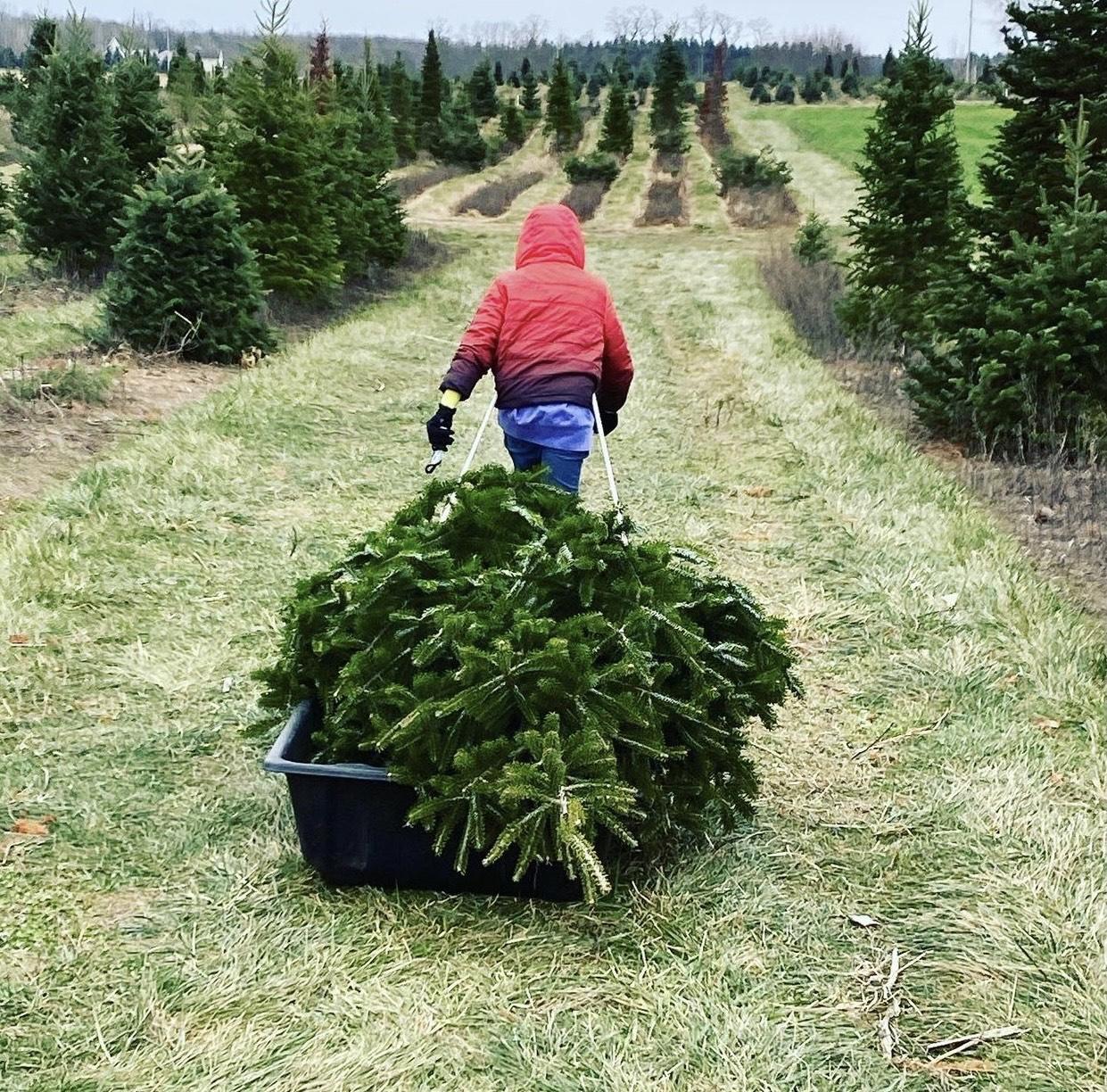 tree-sled